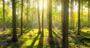 Der Wald ist unsere Apotheke